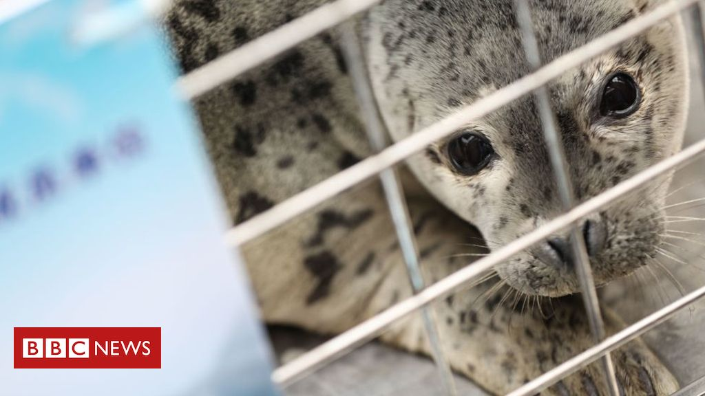 Trafficked baby seals released in China