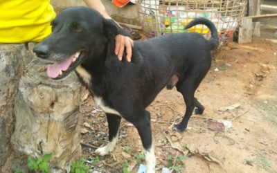 Hero dog saves life of newborn after teen mom buries boy alive in Thailand