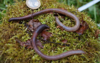 'Earthworm Dilemma' Has Climate Scientists Racing to Keep Up – The New York Times