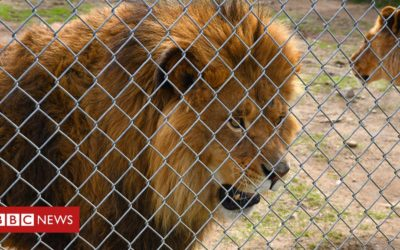 Canada zoo owner charged with cruelty