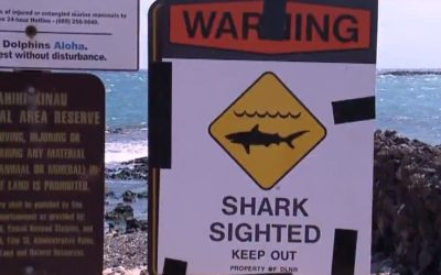 Man killed in Hawaii shark attack, witness says skin 'just torn off'