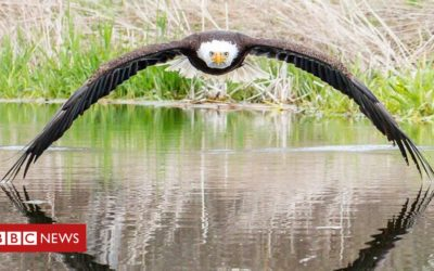 Photographer 'overwhelmed' by eagle photo response