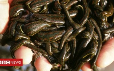 Man smuggled 4,700 leeches in carry-on bag