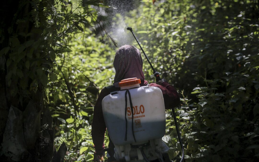 Rape, abuses in palm oil fields linked to top beauty brands ...