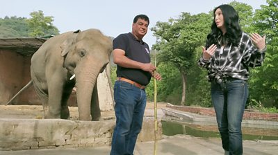 Cher and the rescue of a lonely elephant in Pakistan