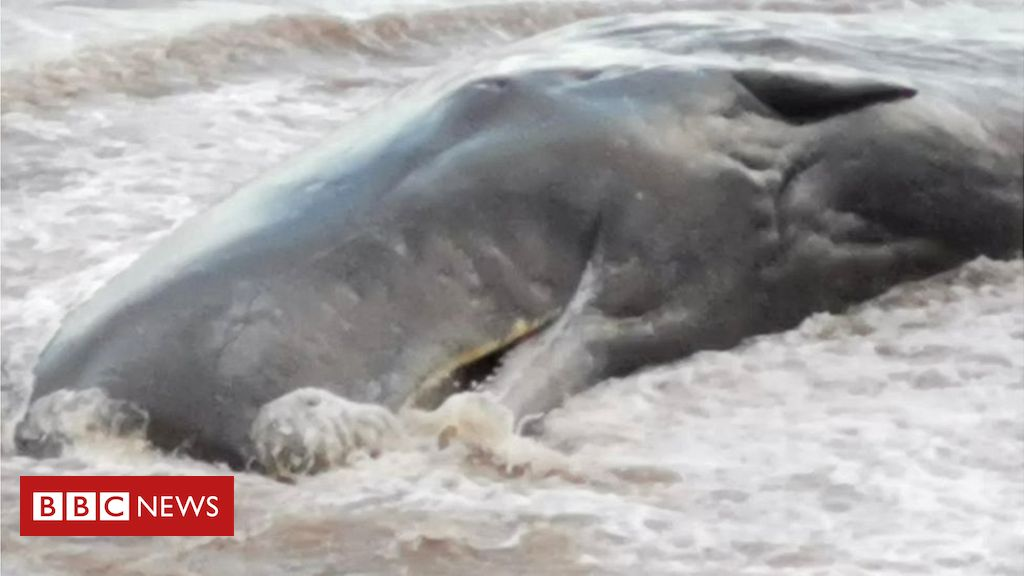 Withernsea: Stranded whale pod washes up on beach