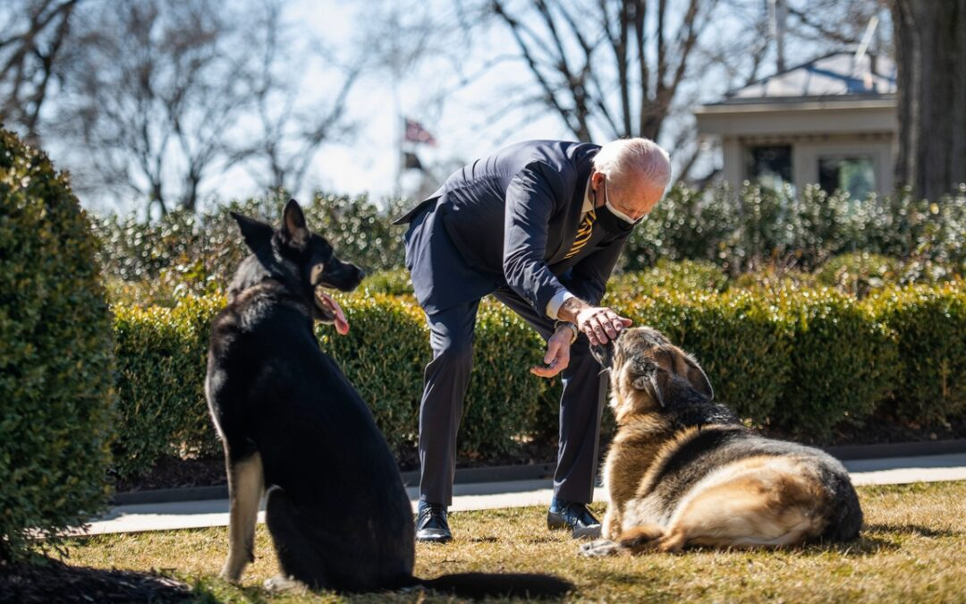 AP Ripped For Coverage Of White House Dog 'Doo' Incident...