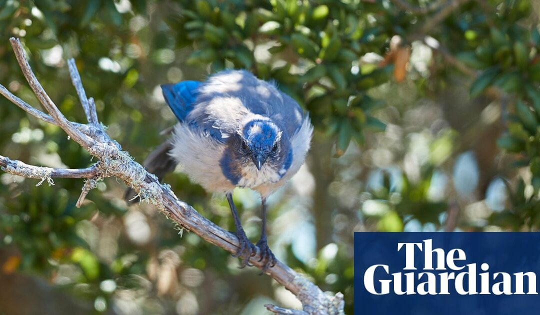 Noisy environments can have detrimental effect on plants, study finds...