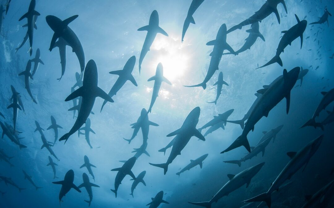 90% of Sharks Were Mysteriously Wiped Out...