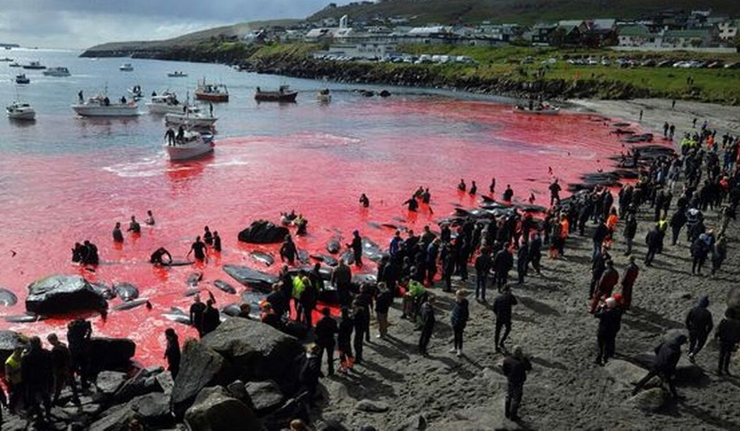 Whale's head impaled on spike as brutal slaughter returns to islands...