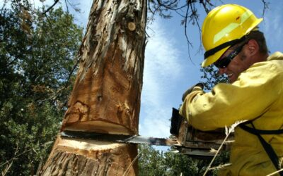 Biden's Bureau Of Land Management Nominee Was Connected To Tree Spiking. What Does That Mean?