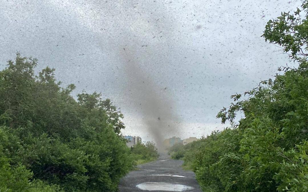 'Tornado' of mosquitos blot out sun...