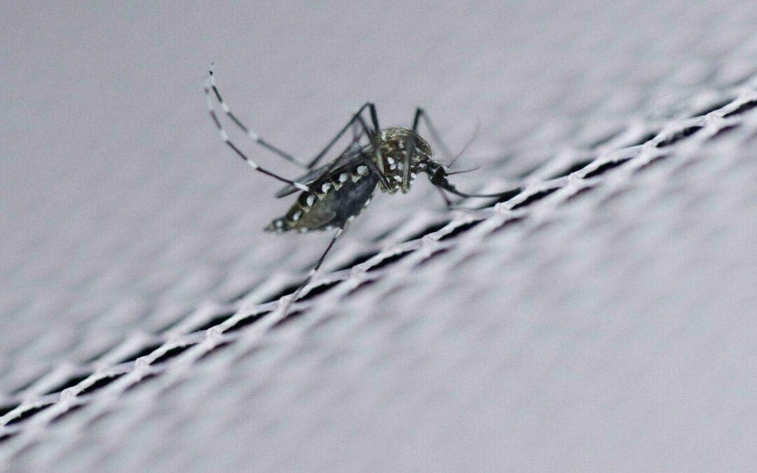 Scientists debate promise, peril of tweaking wild genomes...