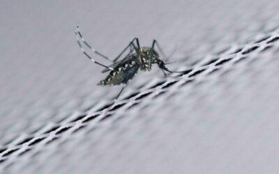 Scientists debate promise, peril of tweaking wild genomes…